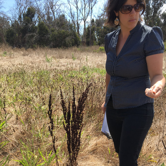 Emily's herb walks