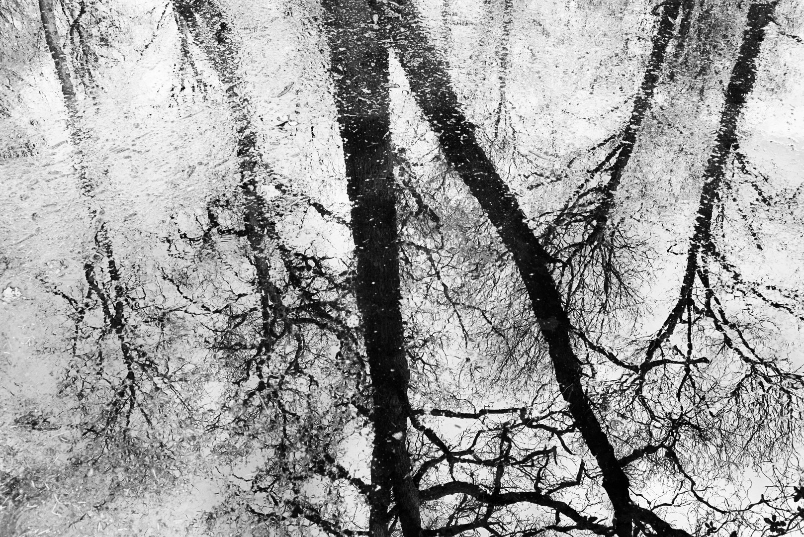 Winter Tree Mirror