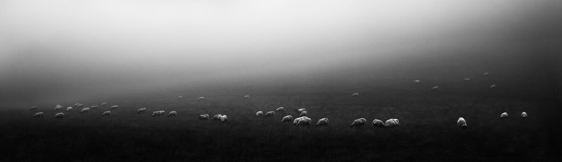 Sheep, Oxfordshire