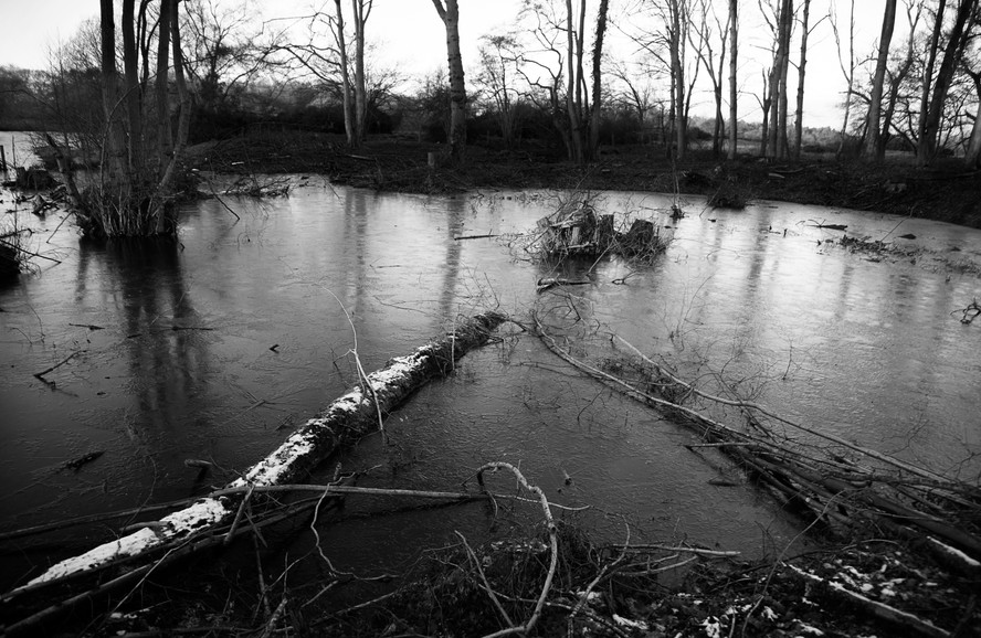 Frozen Log