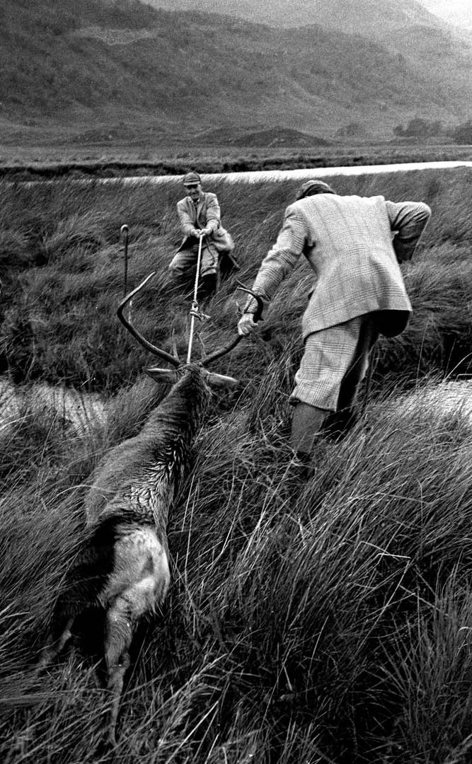 Dragging through Long Grass