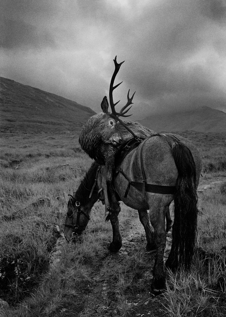 Stag on Pony