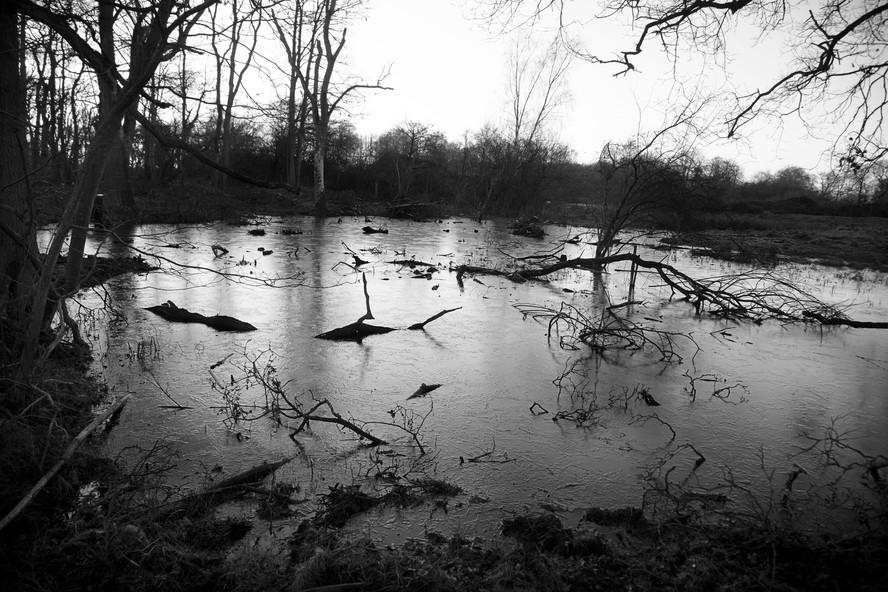 Pond Creatures
