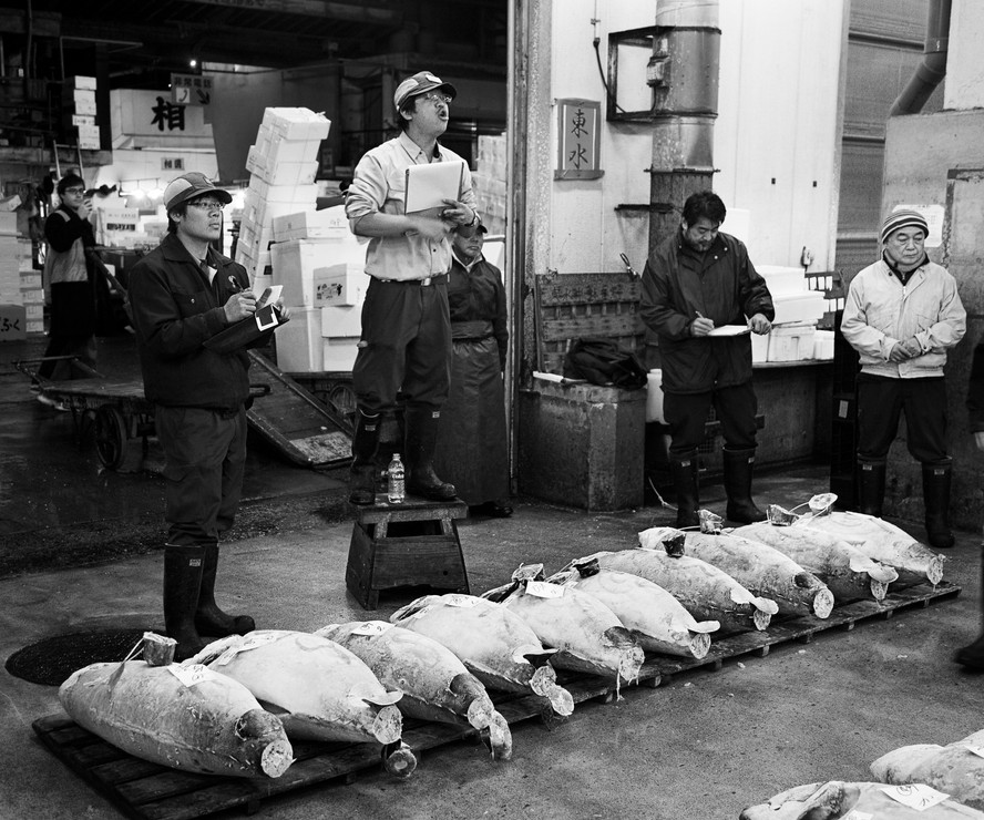 Tuna Auction, Tokyo Early Morning