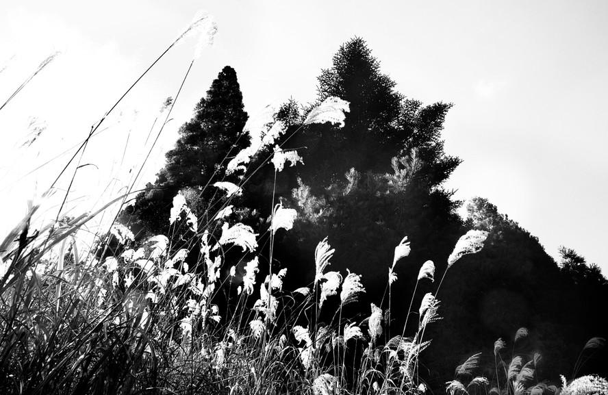 Grasses & Trees
