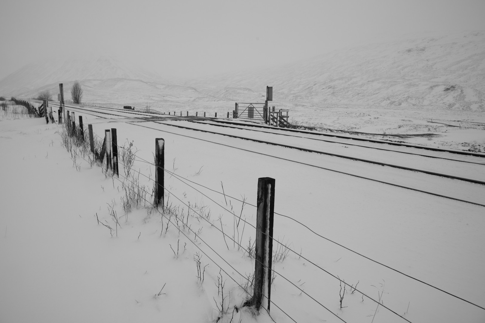 Scottish Snow Tracks