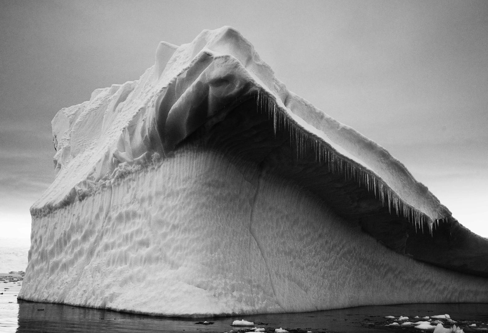 Shark Ice