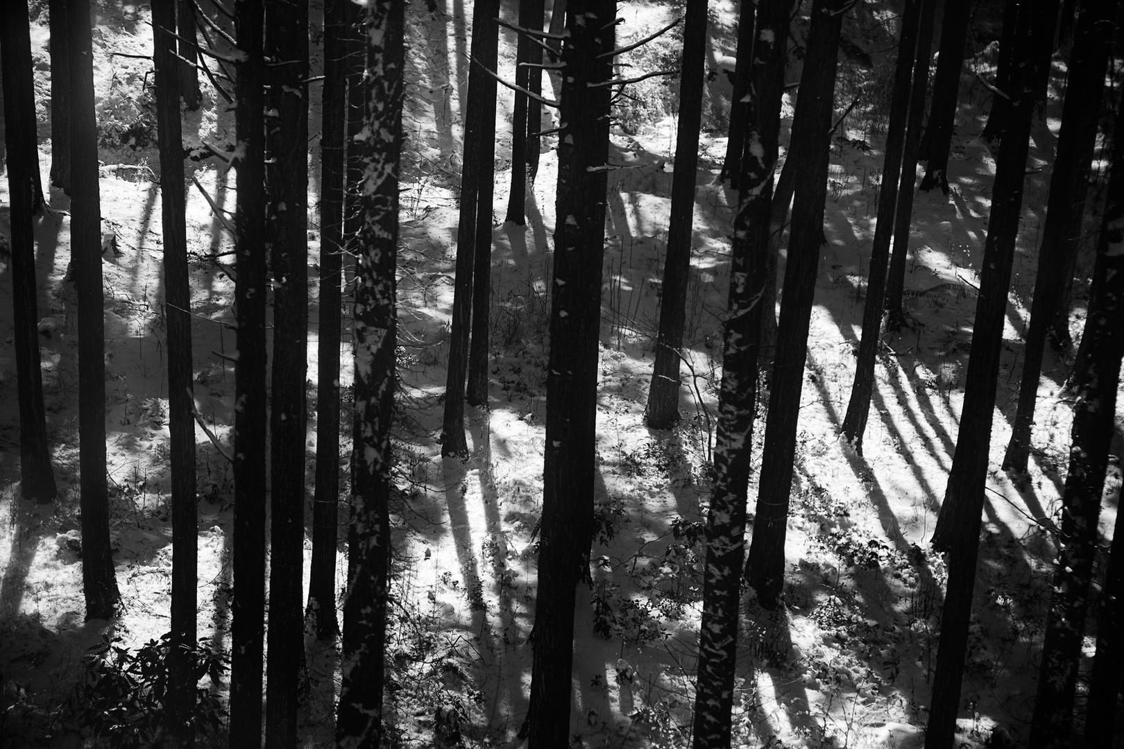 Black Trees, Japan