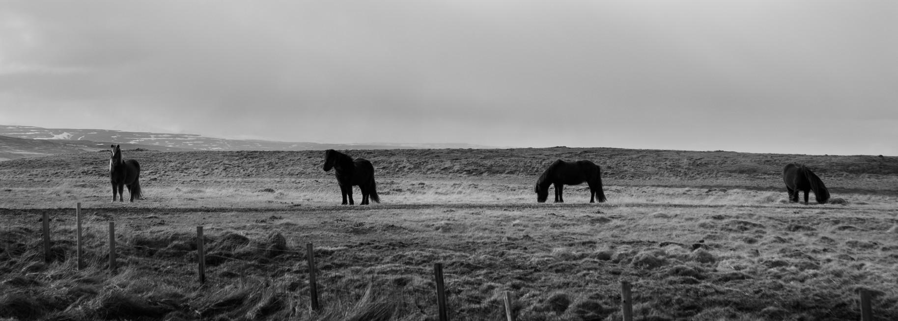 Four Ponies