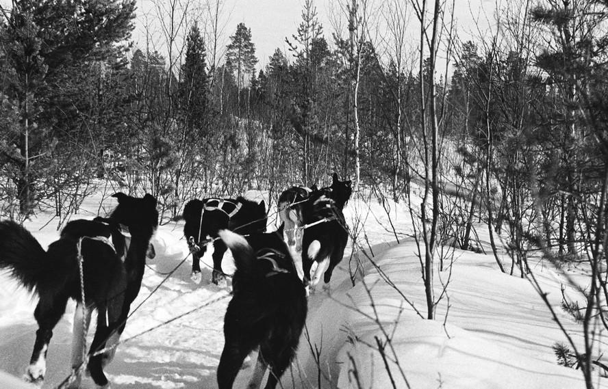 Huskies in Finmark