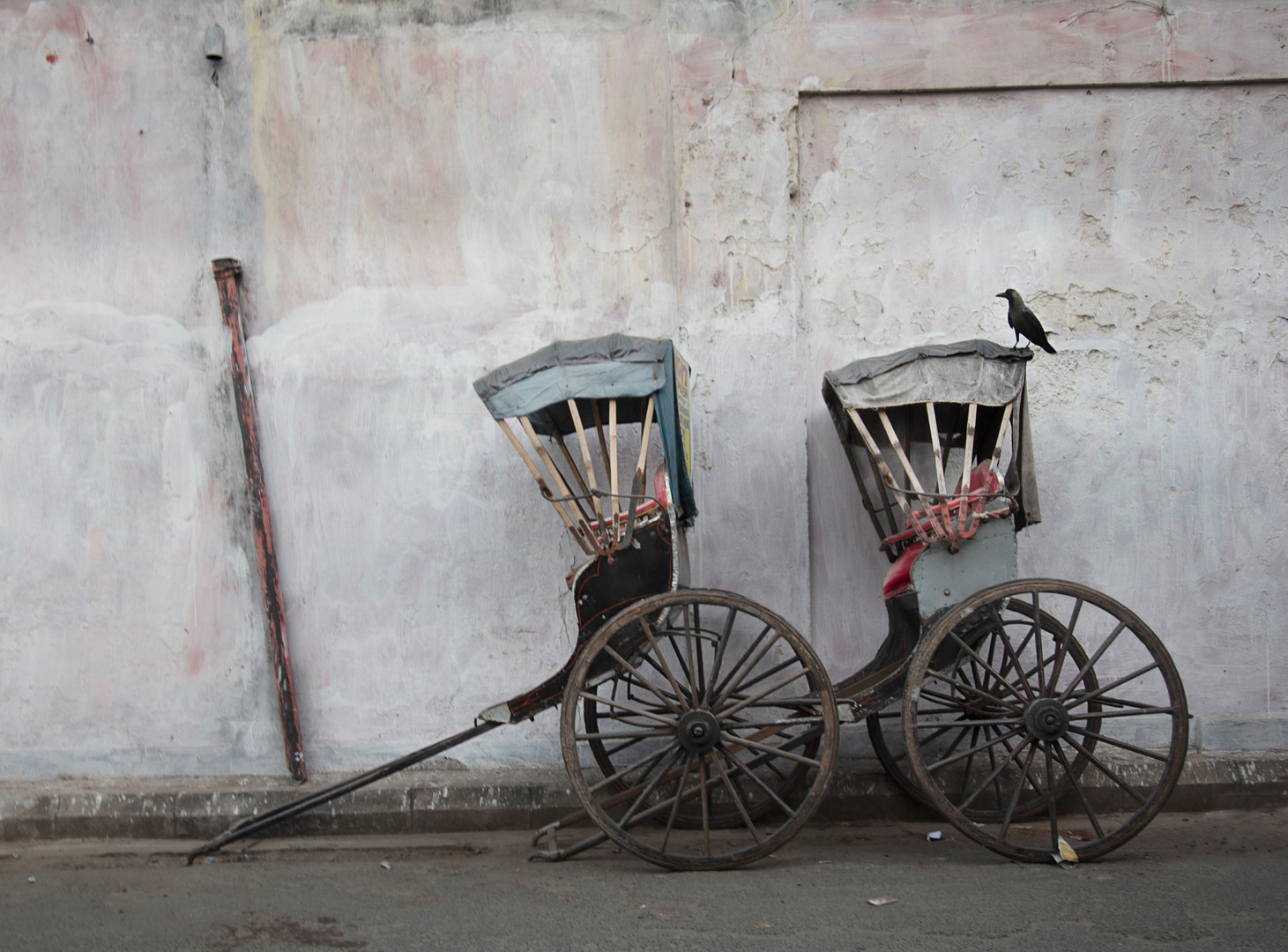 Two Rickshaws and a Blackbird, Kolkata