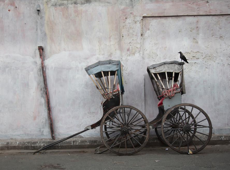 Two Rickshaws and a Blackbird, Kolkata