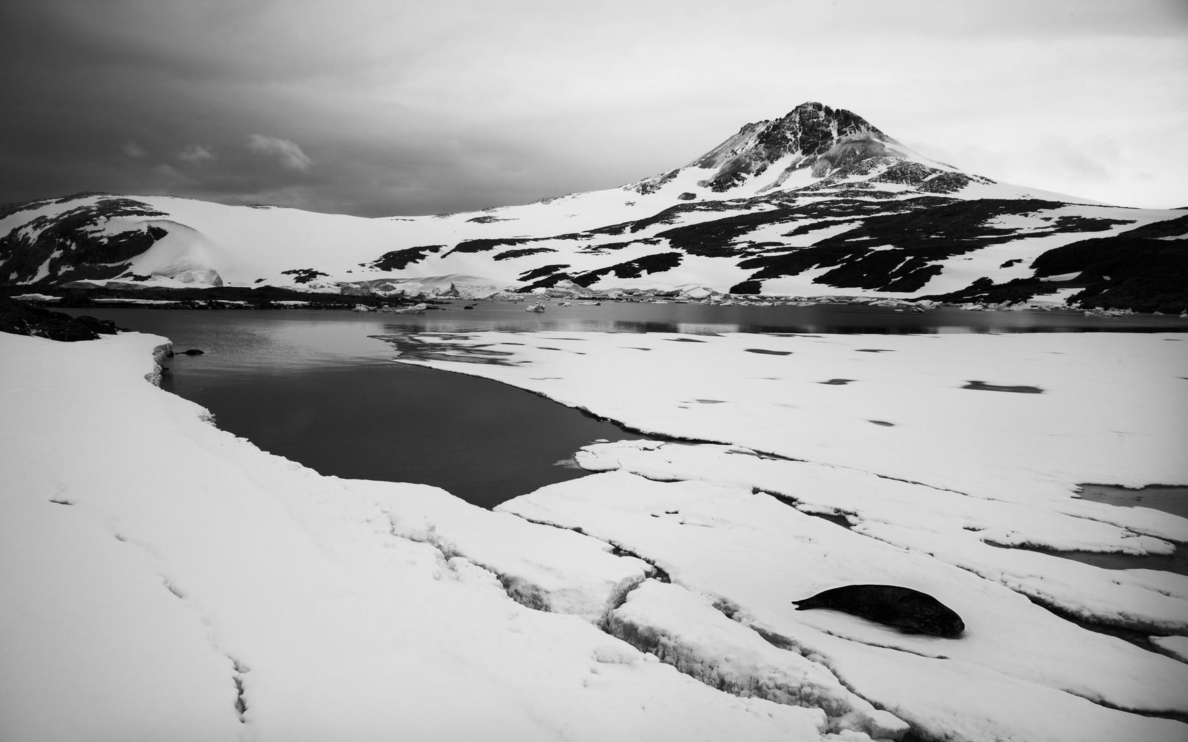 Horseshoe Island with Weddell Seal