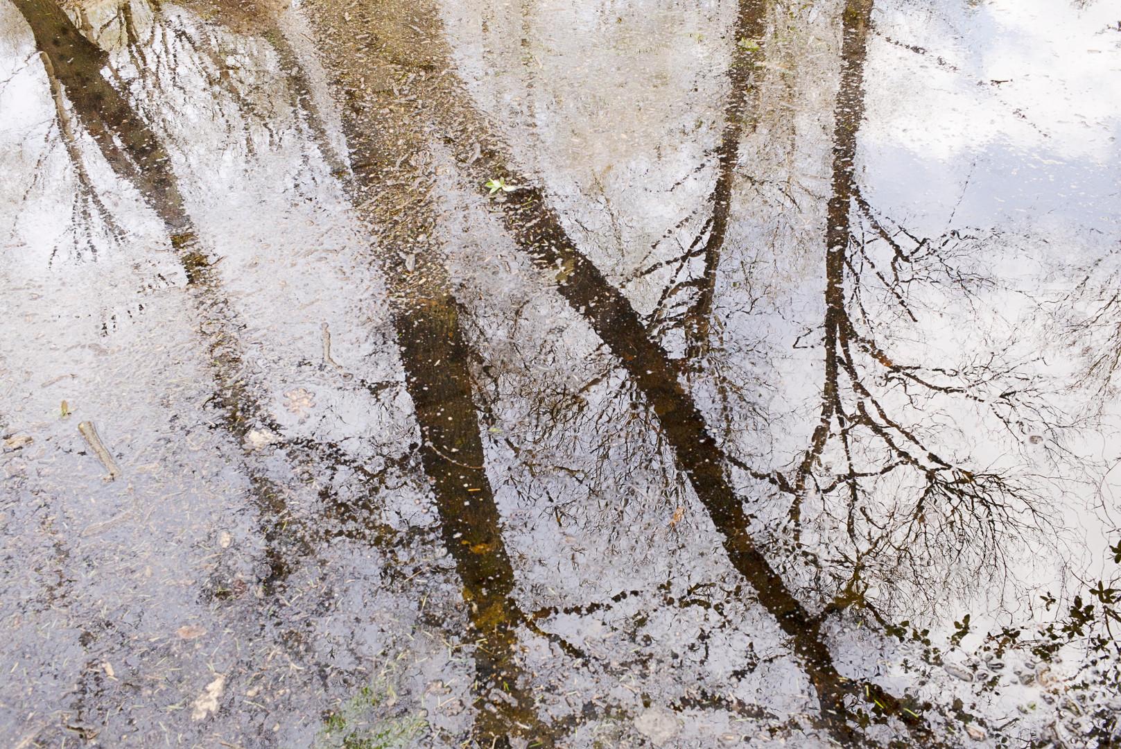 Leaves in Dirty Pool II