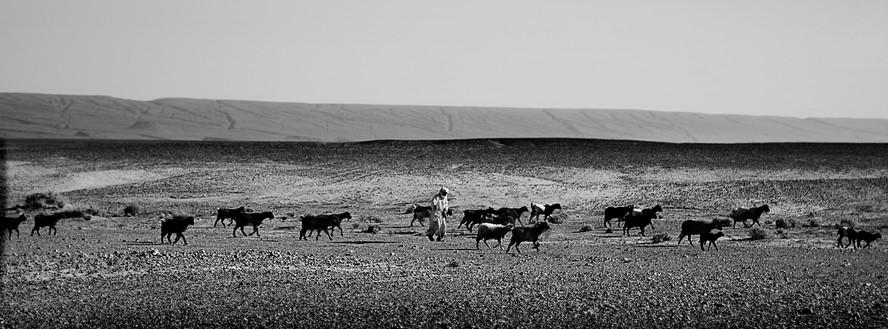 Shepherd with Livestock