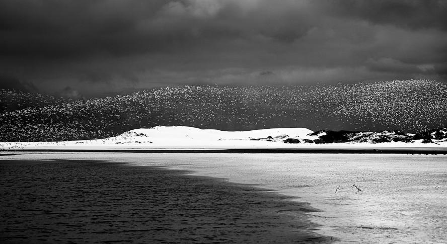 Arctic Terns 5
