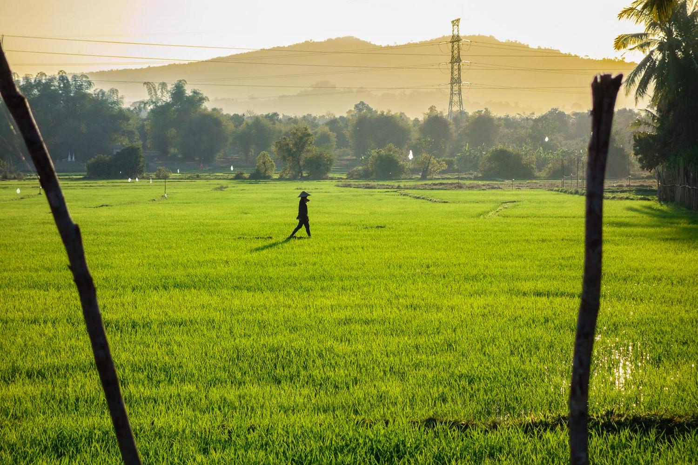 Walk in the fields