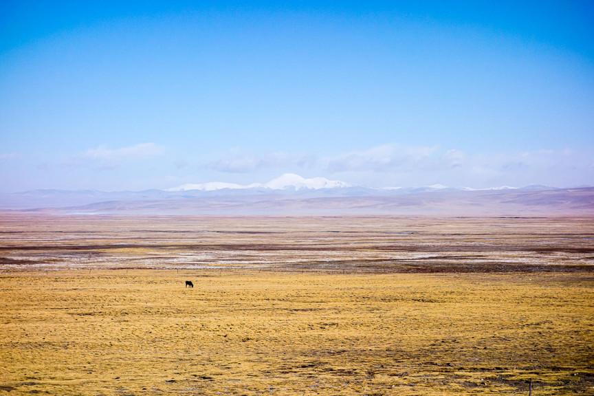 Horse in solitude