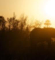 Andy Brunner - Sunset.jpg