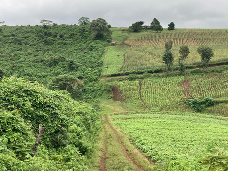 People and elephants: the competition for land in Tanzania's highlands