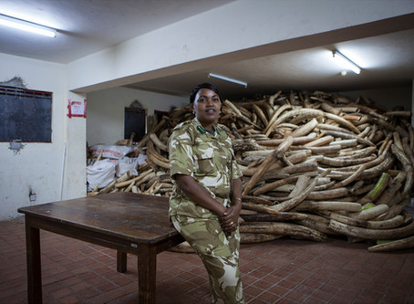 US government helps EPI to keep Africa's ivory secure