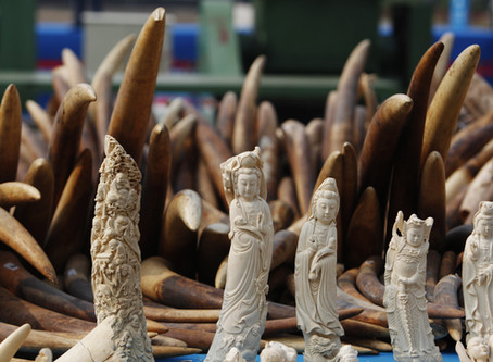 Antiques trade fails to kill off landmark UK Ivory Act