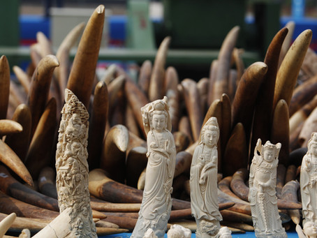 Antiques trade fails to kill off landmark UK Ivory Act
