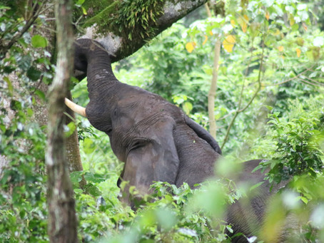 Film release: Ethiopia's Elephant Crisis