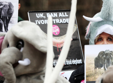 Is the UK Ivory Act Under Threat?