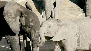 Amboseli 4.png