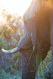 Elephant close up.jpg