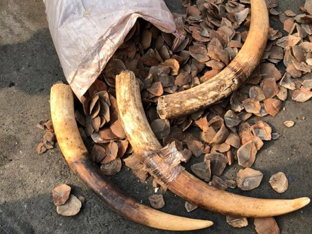 Huge seizure of illegal wildlife products by Nigerian customs officials