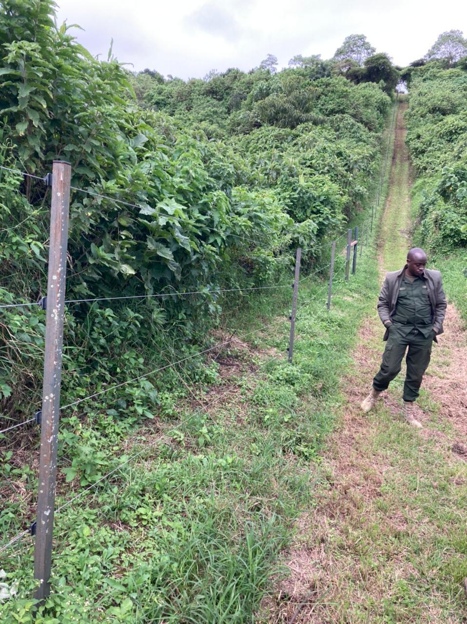 Coffee farmers use electric fences to keep elephants out