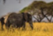 elephant sunset.jpeg