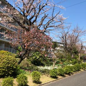 「100年団地」をめざす、竹山団地を視察してきました。