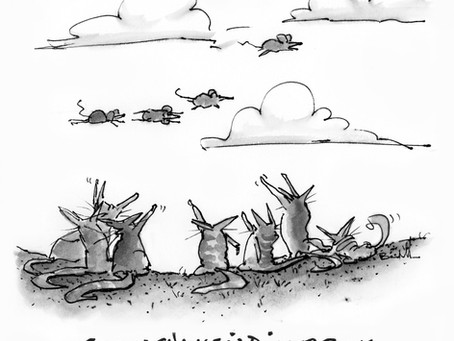 CATS: DISCUSS