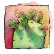 Cactus_toes