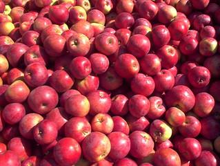 Du sirop et du jus de pommes dans notre magasin!