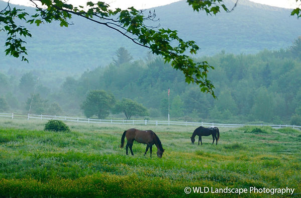 Horses, Landscape, Photography. Nature