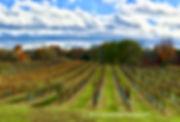 Claremont Vineyard, Vineyard, Wine, Landscape