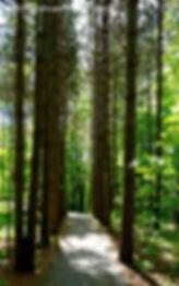 Paths, Landscape, Photography, Photographer, Photo, Nature