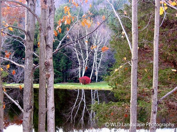 Autumn, Fall, Trees, Leaves, Nature, Photography, Photographer, Photo, Landscape