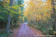 Paths, Landscape, Photography, Photographer, Photo, Nature, Windham, New York