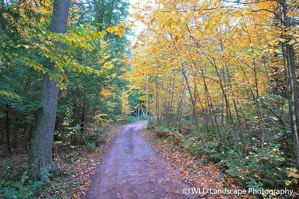 Paths, Landscape, Photography, Photographer, Photo, Nature, Windham, New York