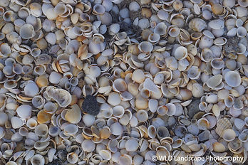 Atlantic, Shells, Ocean, Beach