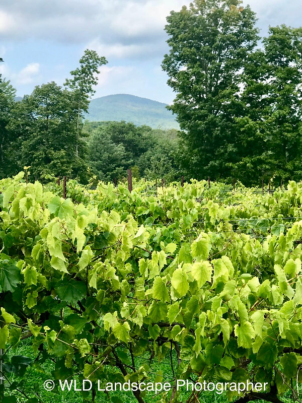 Windham, New York, Landscape, Photography, Photo, Photographer, Mountain, Vineyard