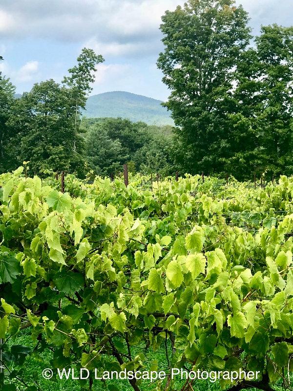 Windham, New York, Landscape, Photography, Photo, Photographer, Mountain, Vineyard