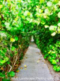 Paths, Landscape, Photography, Photographer, Photo, Nature, Beach, Palm Beach, Florida