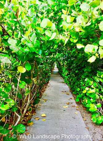 Paths, Landscape, Photography, Photographer, Photo, Nature, Beach, Palm Beach, Florida
