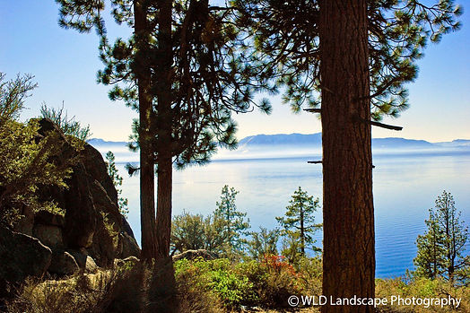 Lake Tahoe, Burn Day, Winter, Woods, Photographer, Photo, Photography